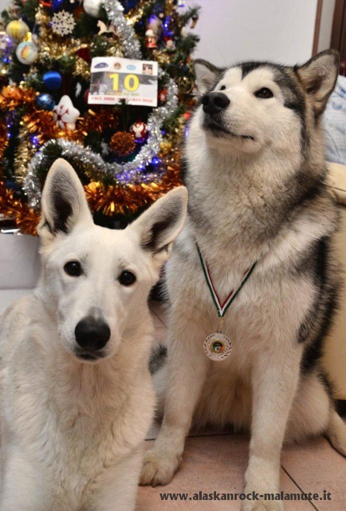 Free Dogs Christmas Race