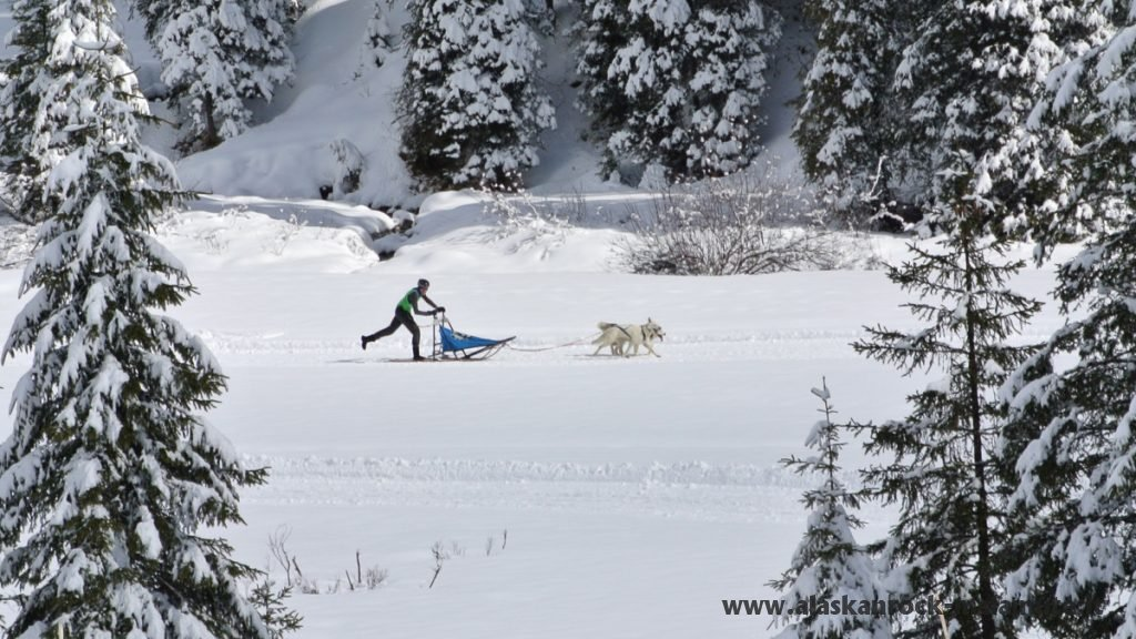 Gara sleddog Bagolino Gaver – sprint 2 cani