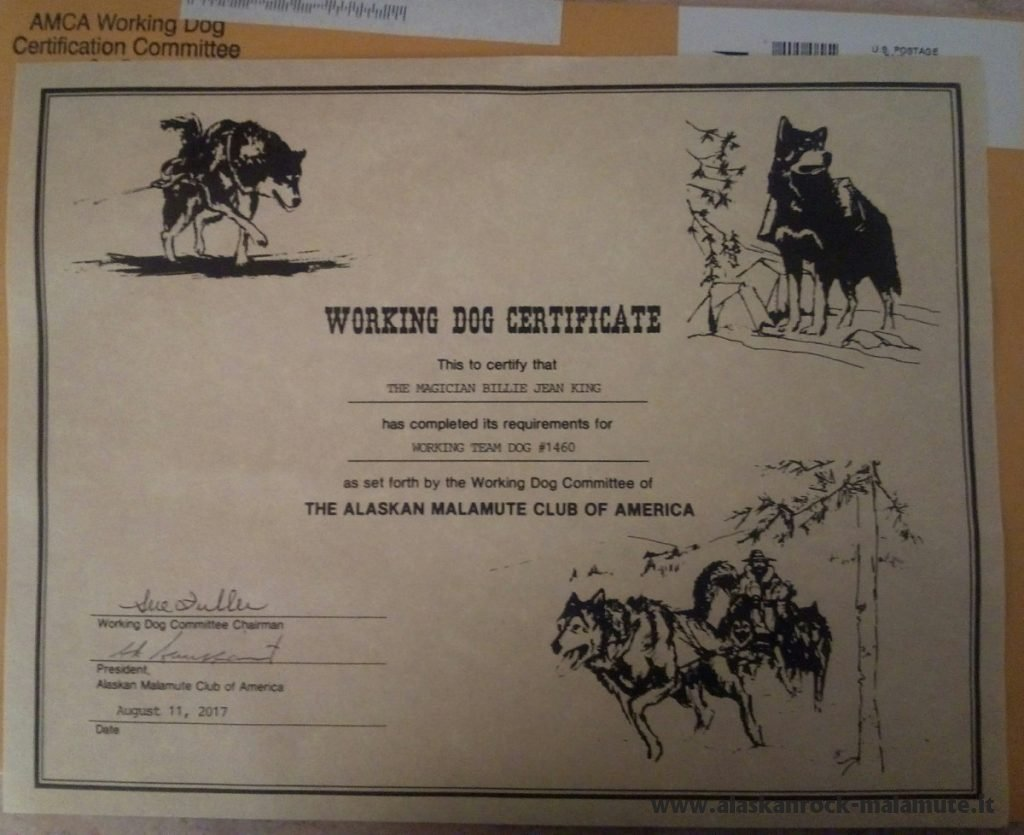 AMCA Working Team Dog Certificate