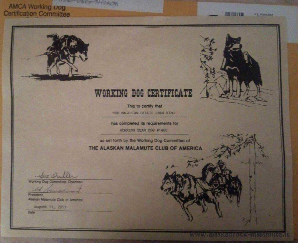 AMCA Working Team Dog Certificate